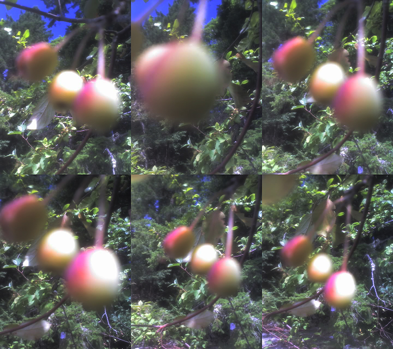 (6)1 2015 August 7 Burgoyne crabapple Gordon Brent Brochu-Ingram (small)